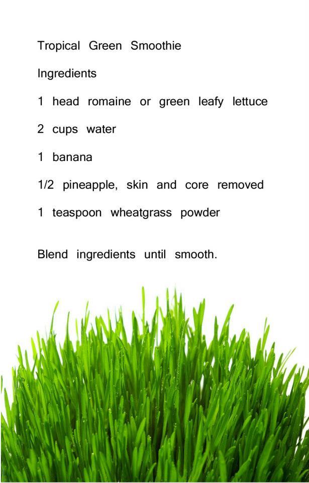 Recepies Wheatgrass 20